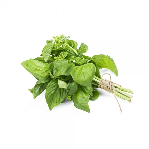 Basil Extra Herb In A Pot 1Pc